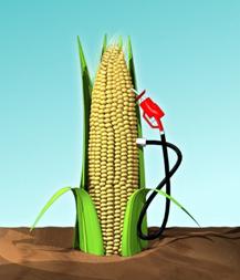 Jagung menjadi ethanol