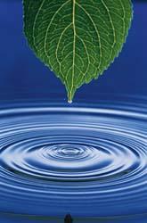 air daun 2