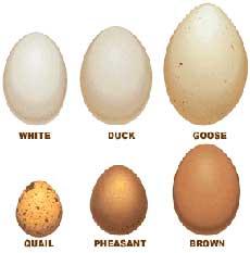 egg-comparison-chart-230